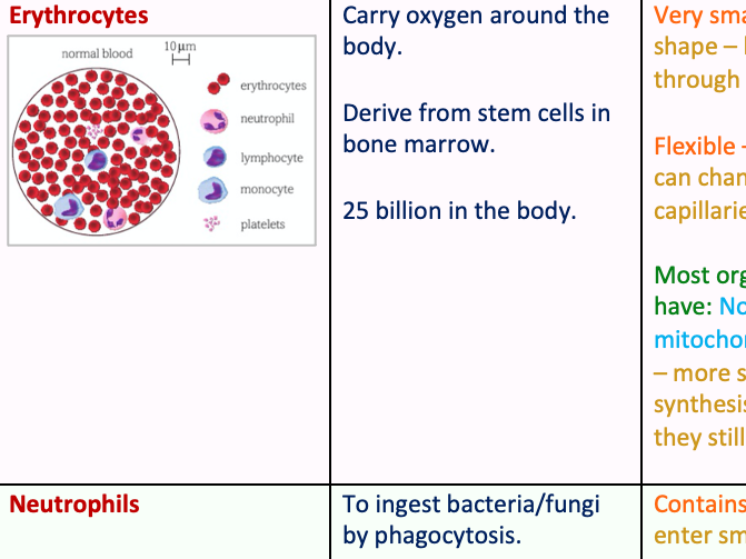 Specialised Animal Cells Table