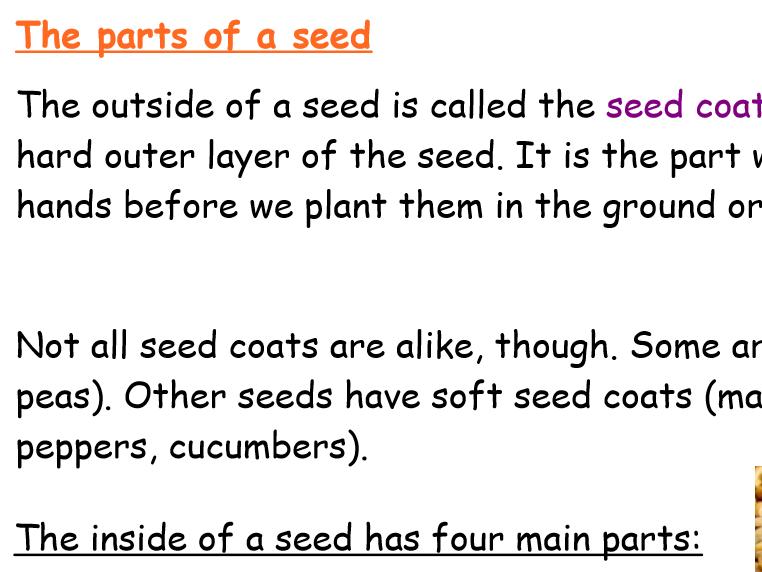 KS2 Plants Bundle!