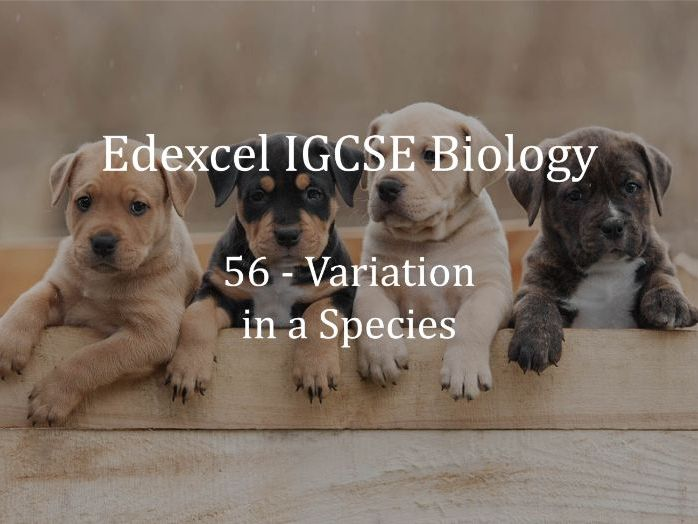 Edexcel IGCSE Biology Lecture 56 - Variation in a Species