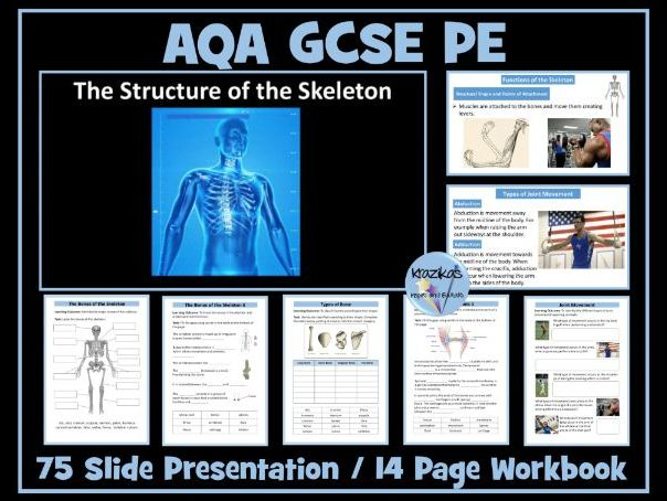 AQA GCSE PE - The Skeletal System