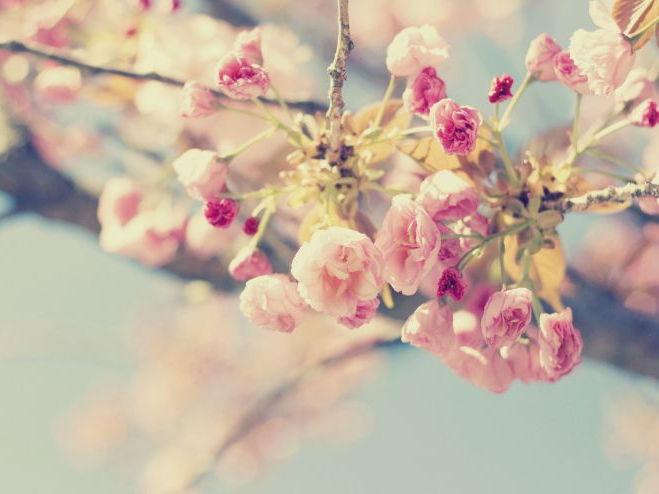 'Spring' PPT -  Gerard Manley Hopkins