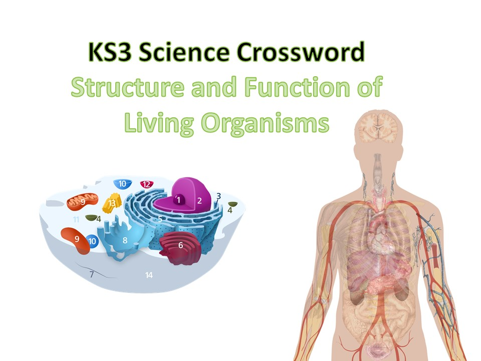 KS3 Structure and Function of Living Organisms Crosswords with Answers