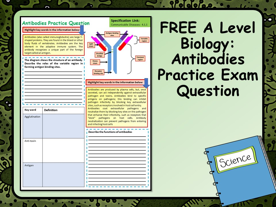 FREE A Level Biology Antibodies Practice Exam Question | Teaching Resources