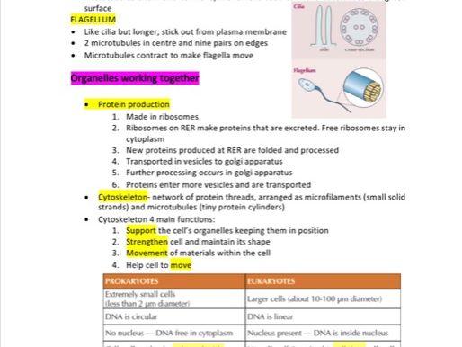 OCR Alevel Biology Module 2 Notes