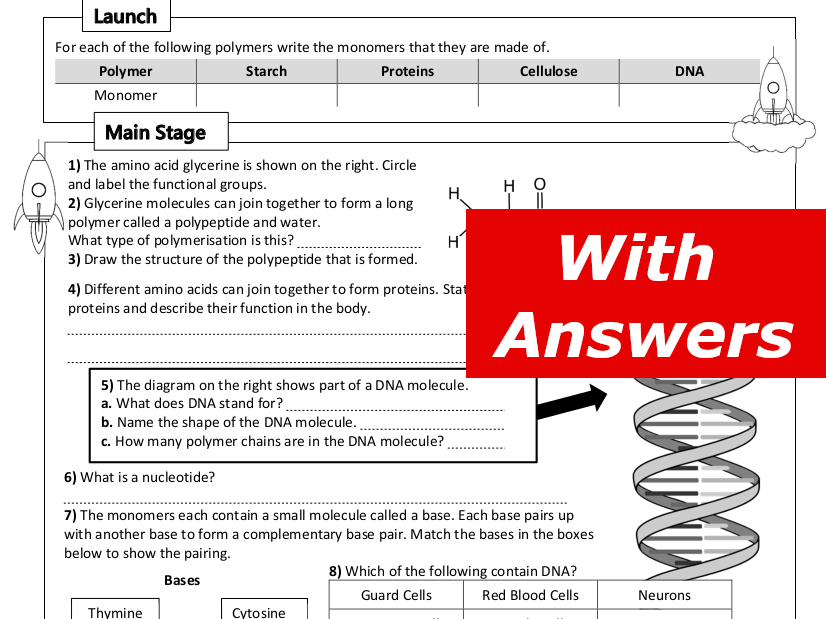 DNA and Natural Polymers Home Learning Worksheet GCSE