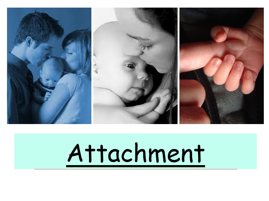 ATTACHMENT WHOLE TOPIC PACK POWERPOINT & STUDENT WORK BOOKLET