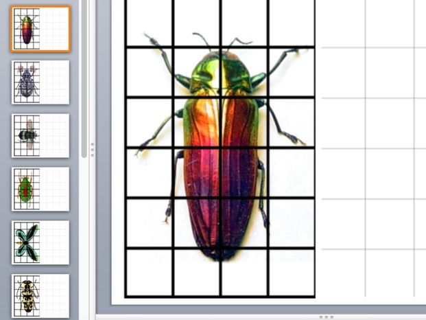 Beetle / Bug / Insect Gridded Drawing Cover sheet Homework