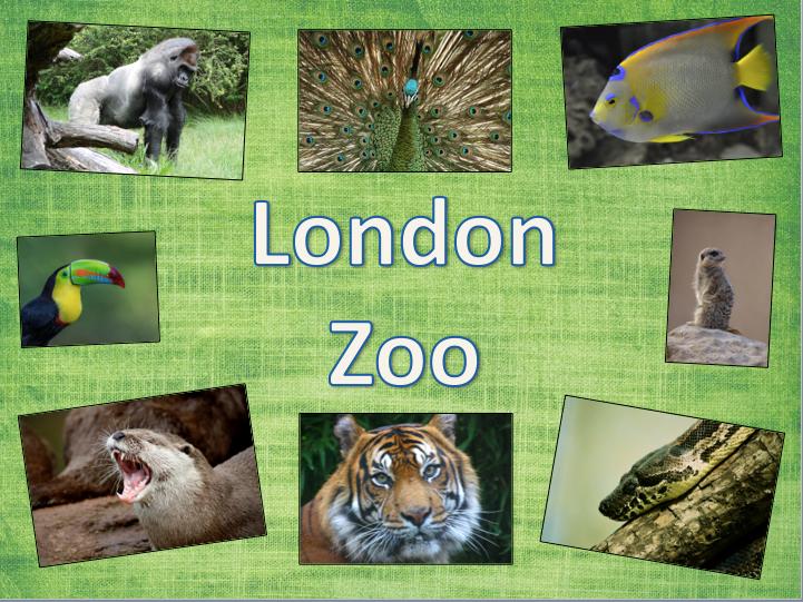 London Zoo - KS1/KS2