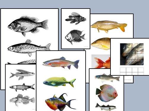 Big Fish Bundle - Drawing & Creating (Animals)