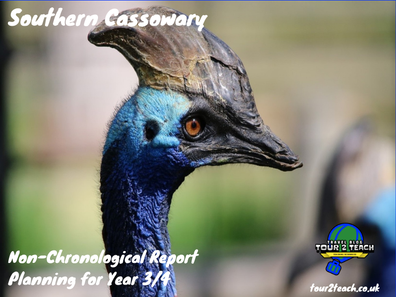 Southern Cassowary: Non-Chronological Report Planning for Year 3/4
