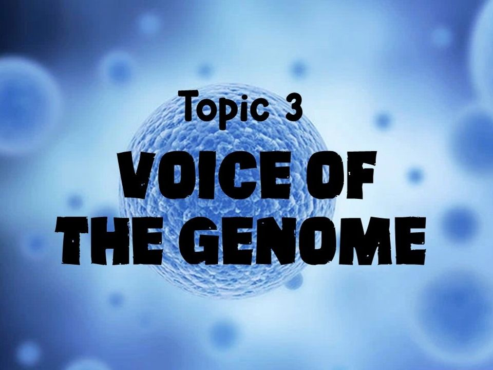 Edexcel A Level Biology - Topic 3: Voice of the Genome Revision Cards