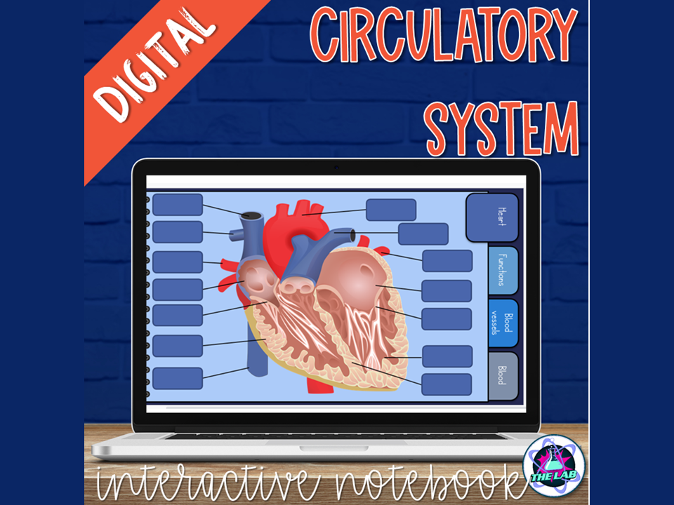 Circulatory System Digital Interactive Notebook