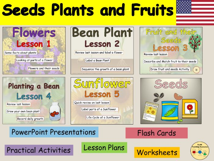 Plants Flowering Plants Life Cycle Sunflower and Bean Plant Labeling Worksheets PowerPoint