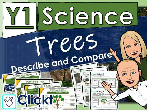 Year 1 Science: Plants: Describe and Compare Trees