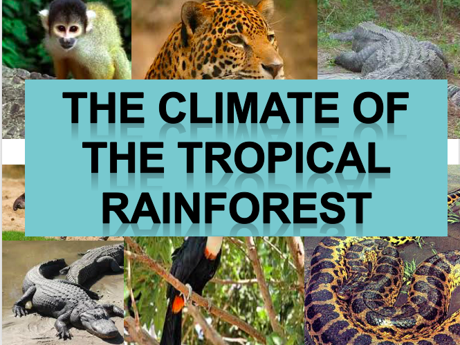 What is The Climate of The Tropical Rainforest? Ecosystems