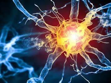 OCR A level Biology Chapter 13 Neurones