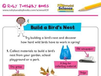 Build a bird's nest