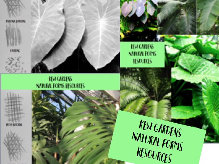 Kew Gardens / Natural Form / Tropical Leaves Drawing Resources With Markmaking Examples
