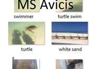 Photos Turtle Crab Beach New Caledonia