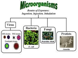 Culturing of Microorganism