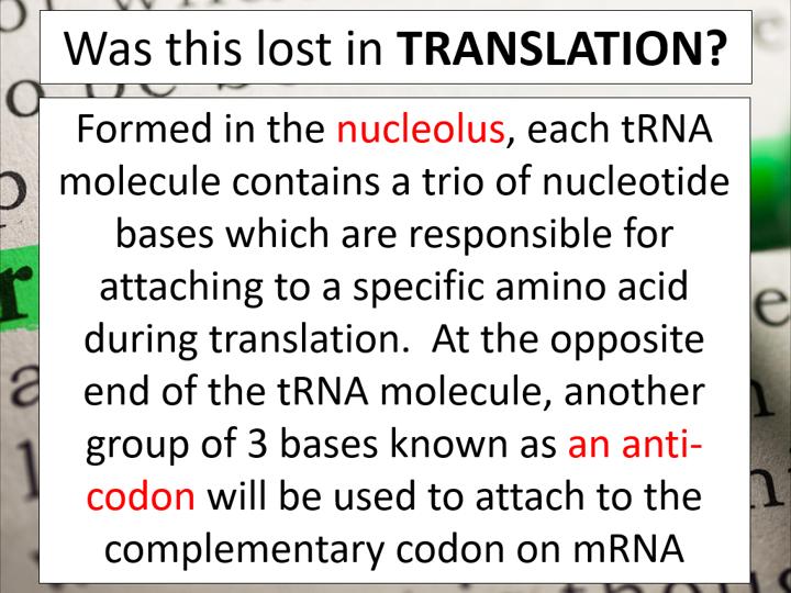 Translation (AQA A-level Biology)