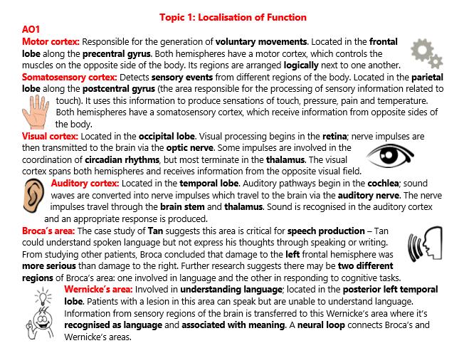 A2 Biopsychology Revision (Psychology)