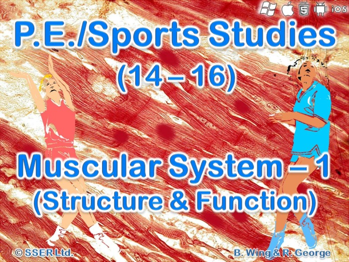 PE13STa - Muscular System - 1 (Structure & Function)