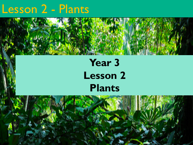 Year 3 - Science - Plants - Lesson 2 (Powerpoint version)
