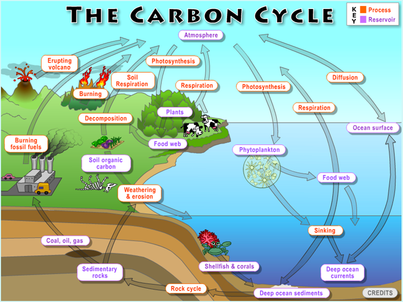 Edexcel A Level Carbon Cycle Lesson 1