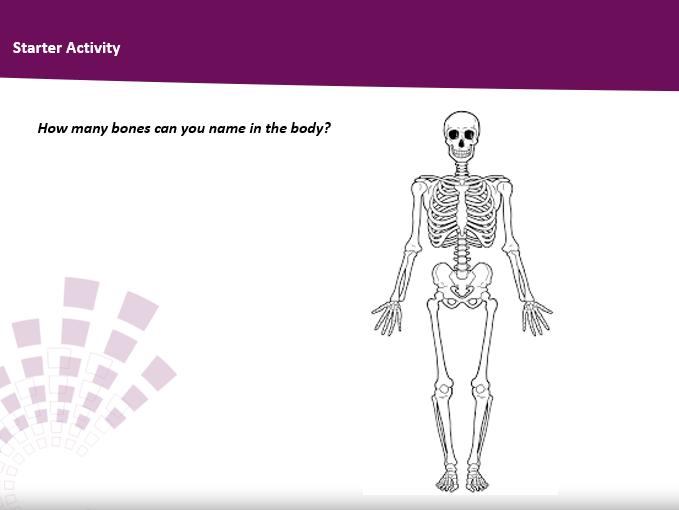 Skeletal System Teaching Pack