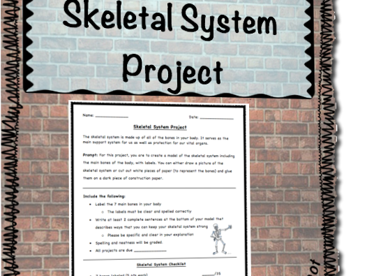 Skeletal System Project