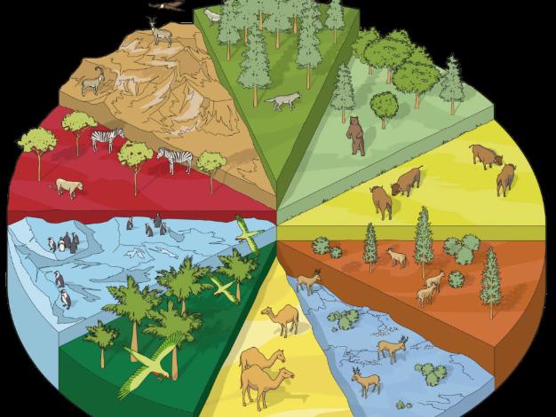 Los hábitats Ks4