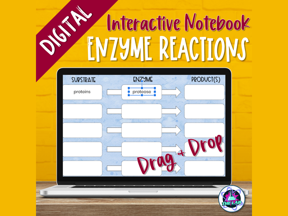 Enzymes Digital Interactive Notebook Activity