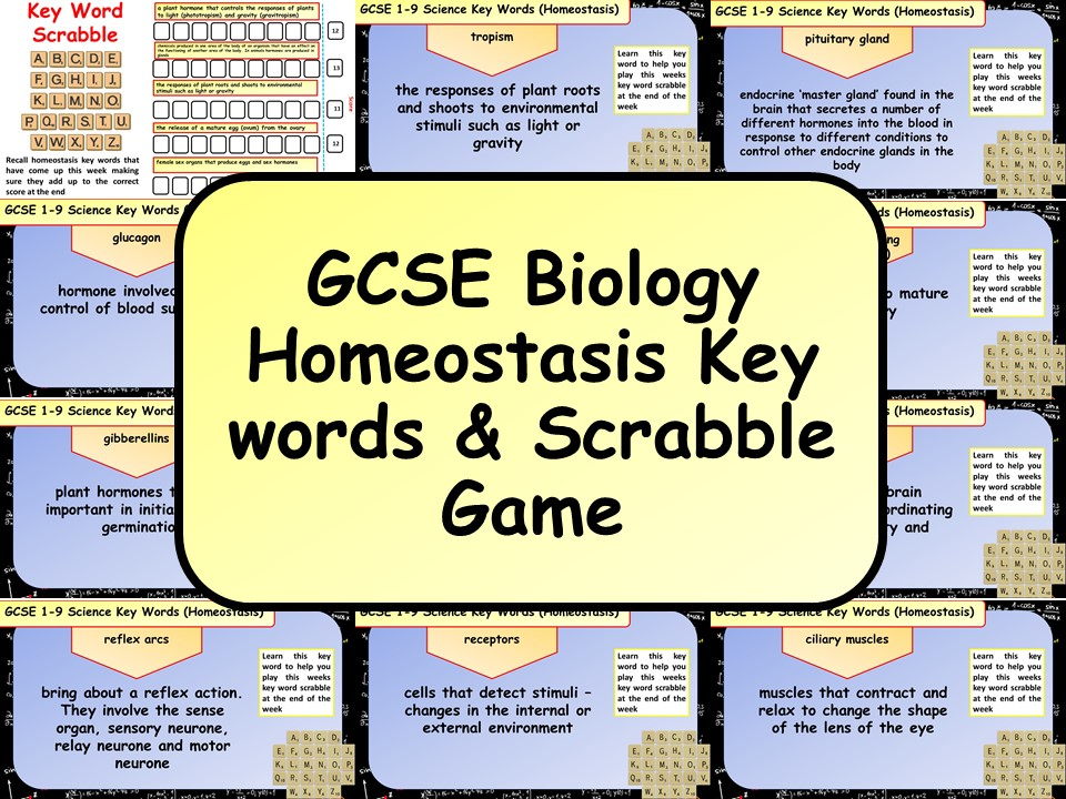 Free GCSE Biology (Science) Homeostasis Key words & Scrabble Game by chalky1234567   Teaching Resources