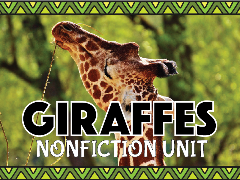 Giraffe Nonfiction Unit