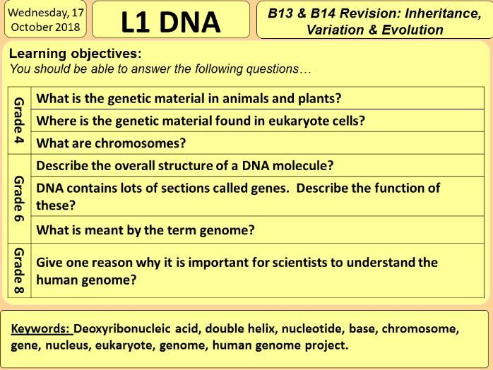 DNA, Chromosomes, Genes and the Genome (GCSE Biology)