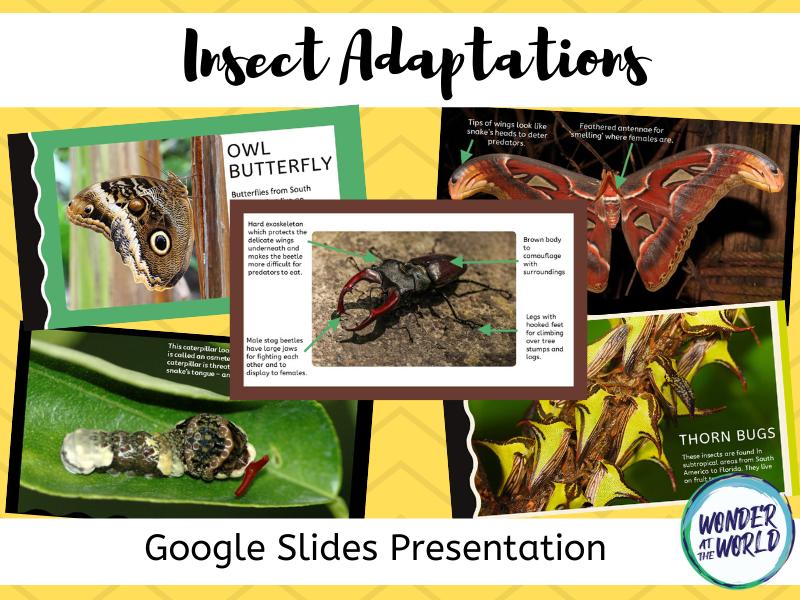 Insect Adaptations Google Slides presentation