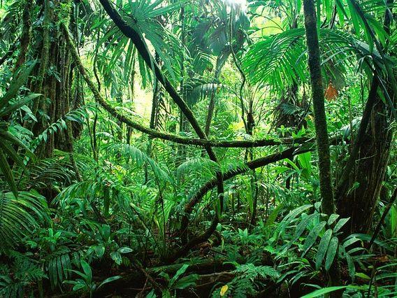 Jungles & Snakes Picture-Poem Frames (4)