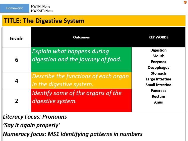 KS3: The Digestive System