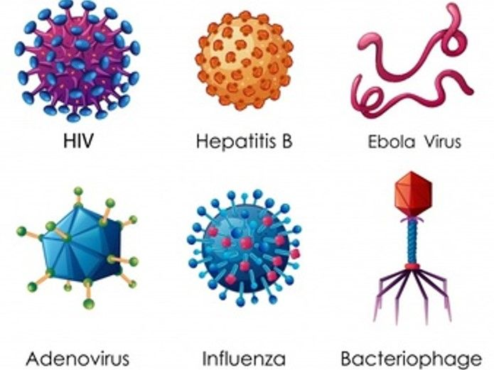 Viral diseases AQA new spec