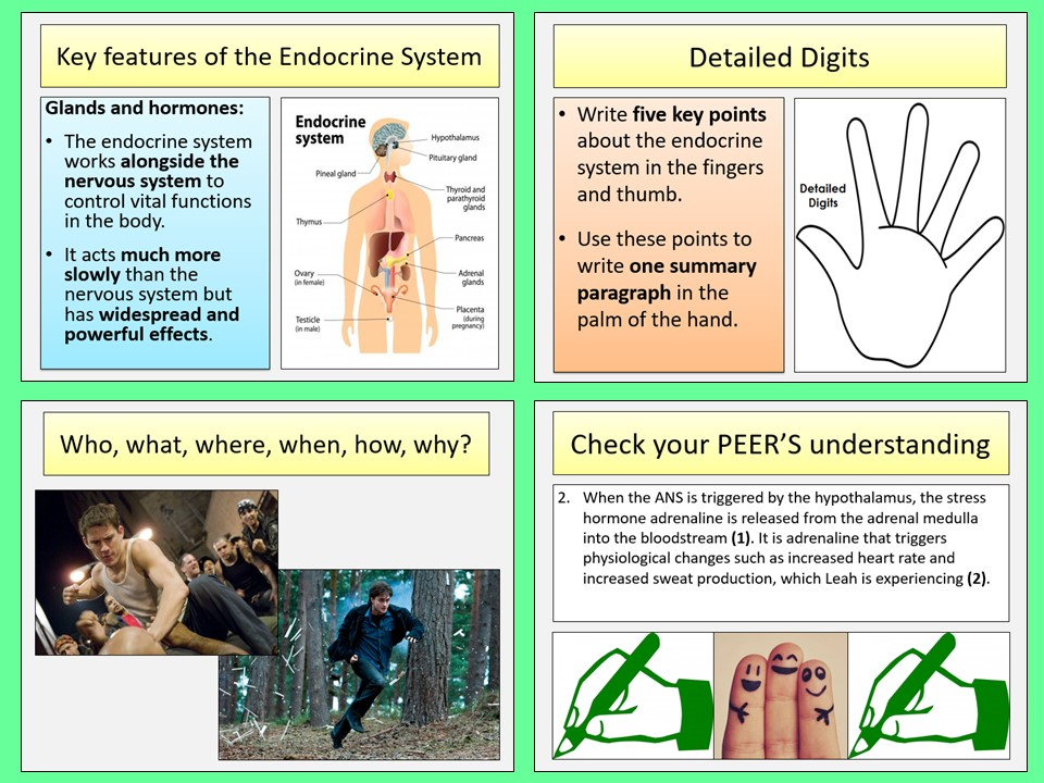 AQA A-level Psychology - The Endocrine System Lesson - Biopsychology topic