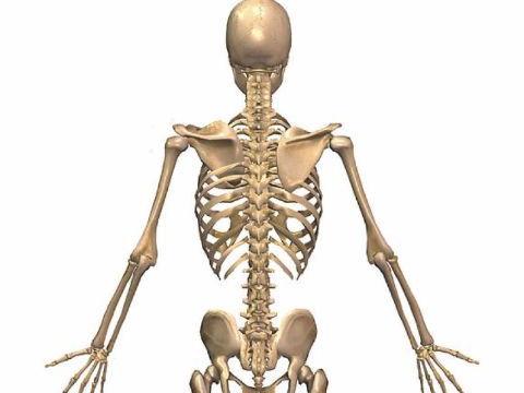 Edexcel New GCSE PE 9-1. Skeleton Diagram and a list of the bones of the body.