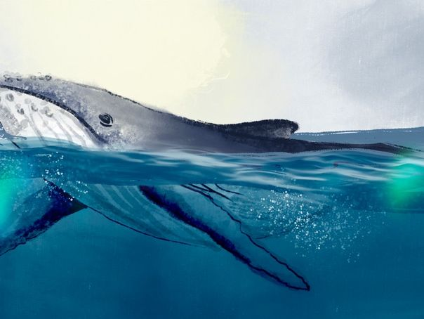 Cetacean Study Bundle