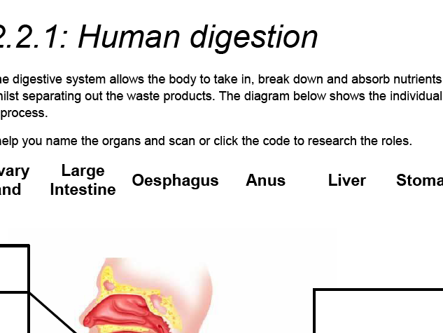 AQA GCSE Biology: Trilogy. Lesson 14 Digestion