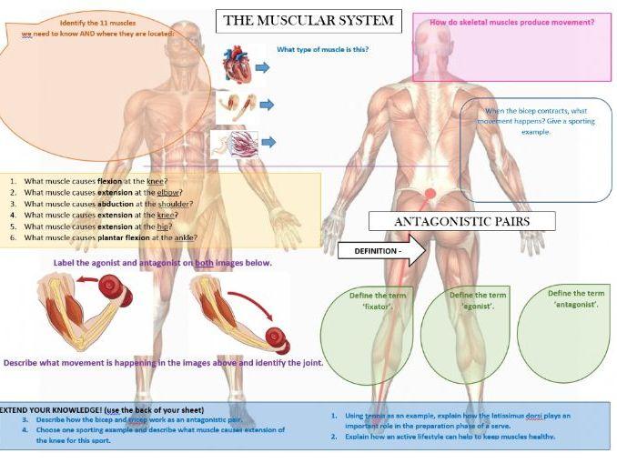 Secondary anatomy, biomechanics and physiology resources