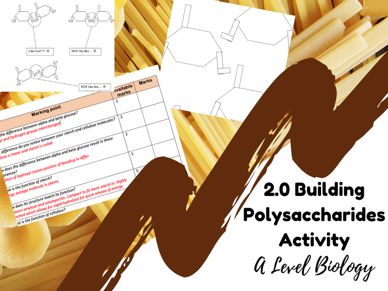 Building Polysaccharides Activity (with marking grid) Biomolecules - A Level Biology