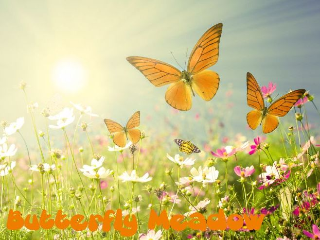 Escape to Butterfly Meadow - Mindfulness