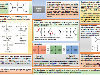 Amino acids knowledge organiser