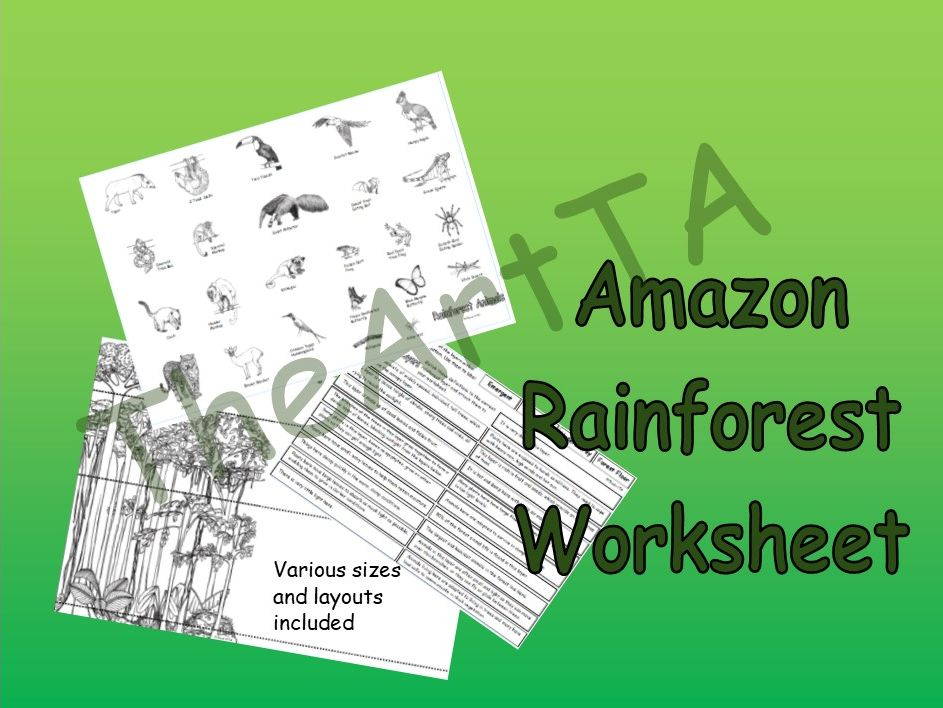 Rainforest Layers Worksheet (Amazon)