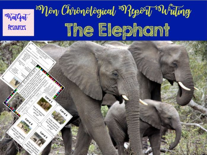 The Elephant - Non Chronological Report Writing